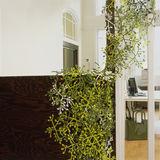 Koziol - Cherrie - dekoracja