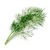 Véritable - Podstawowe Zioła - wkład nasienny - koper - do doniczek autonomicznych