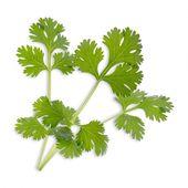Véritable - Podstawowe Zioła - wkład nasienny - kolendra - do doniczek autonomicznych