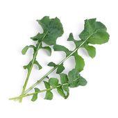 Véritable - Warzywa Liściowe - wkład nasienny - rukola - do doniczek autonomicznych