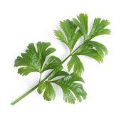 Véritable - Warzywa Liściowe - wkład nasienny - seler zwyczajny - do doniczek autonomicznych