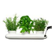 Sagaform - Project - potrójny wazon na zioła - wymiary: 13 x 40 cm