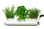 pojemniki i wazony na świeże zioła
