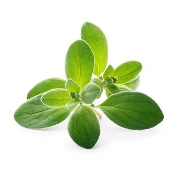 Véritable - Podstawowe Zioła - wkład nasienny - majeranek - do doniczek autonomicznych