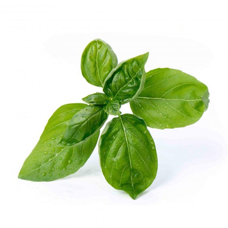 Véritable - Podstawowe Zioła - wkład nasienny - bazylia - do doniczek autonomicznych